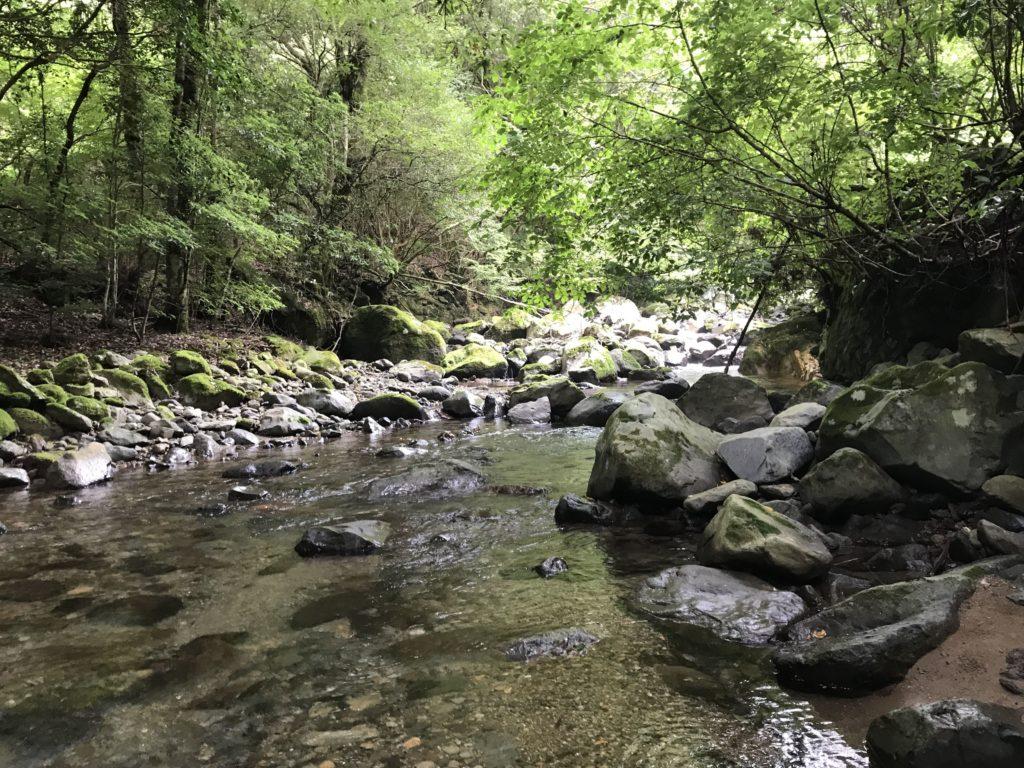 渓流の写真
