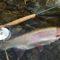 【釣行記】天然のニジマスを釣るには北海道へ!釣り方のコツとオススメロッド